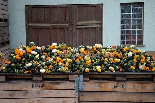 Как хранить овощи правильно