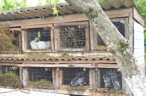 Условия содержания кроликов