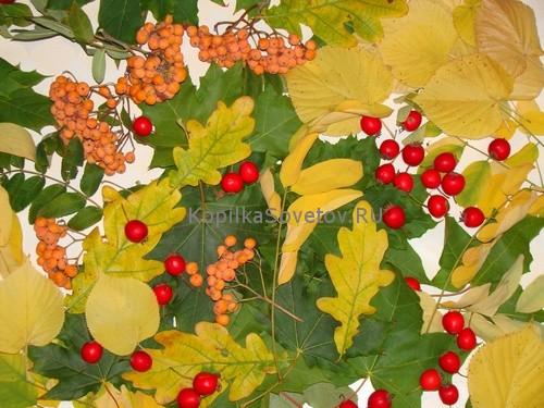 Листья и ягоды